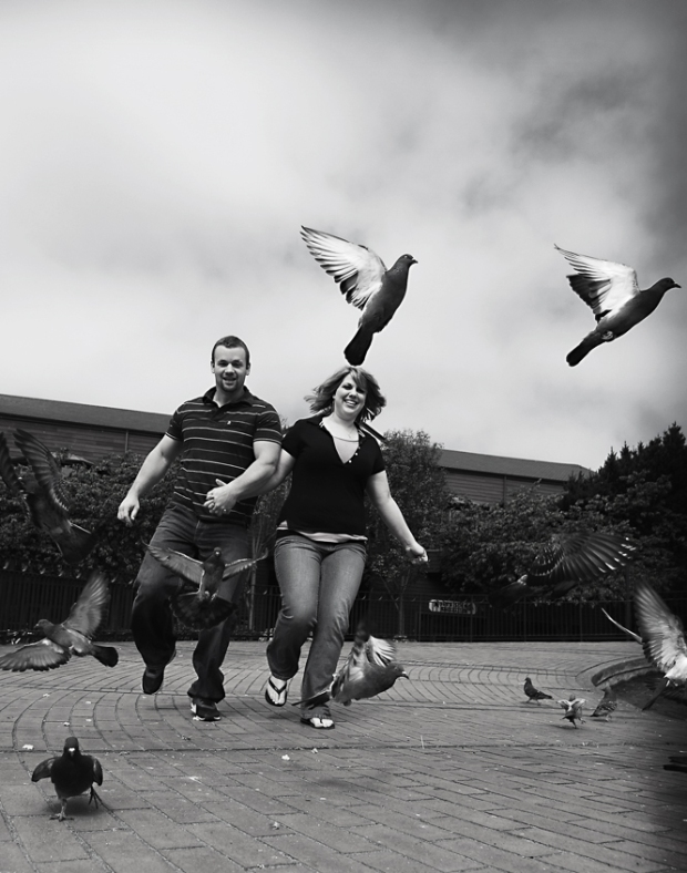 Multiple Pigeons Engagement Photo
