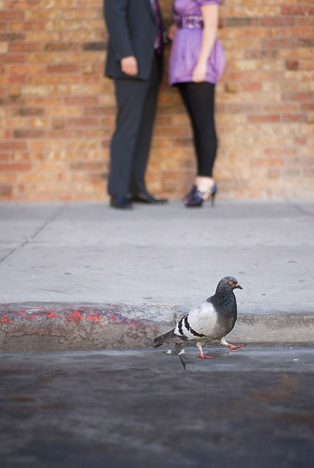 Pigeon Engagement Photo